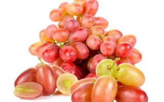 Сорт винограда «Преображение», описание, фото, видео