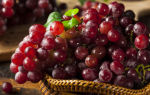 Приготовление вина из красного винограда в домашних условиях