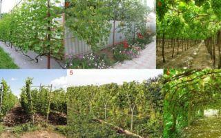 Шпалеры для винограда своими руками