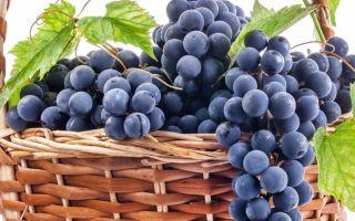 Вино из винограда «Молдова»
