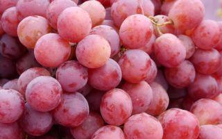 Сорт винограда «Велес», его описание с фото и видео