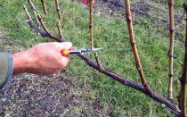 Обрезка винограда для новичков: схемы, порядок работы