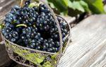 Черный виноград. Польза и вред для организма