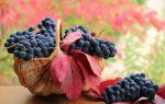 Вино из винограда «Изабелла»