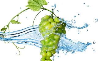 Польза зеленых и белых сортов винограда