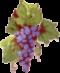 Виноградные гроздья