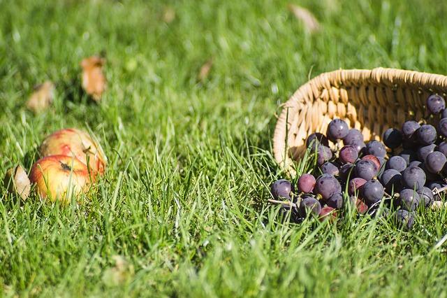 виноград на траве