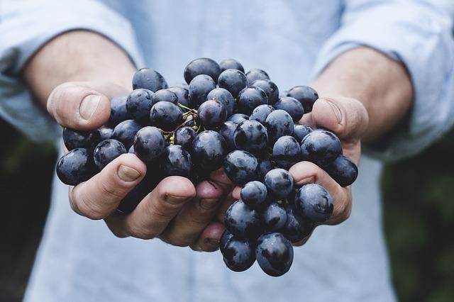 виноград в руках