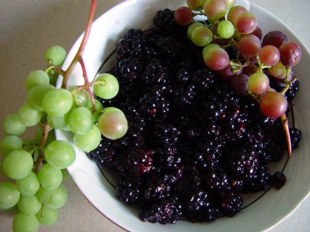 виноград ежевика