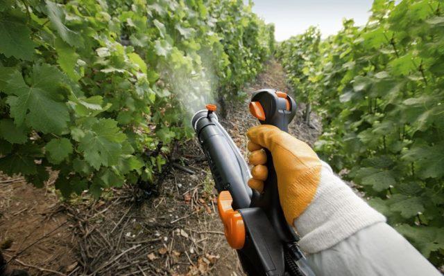 опрыскивание виноград