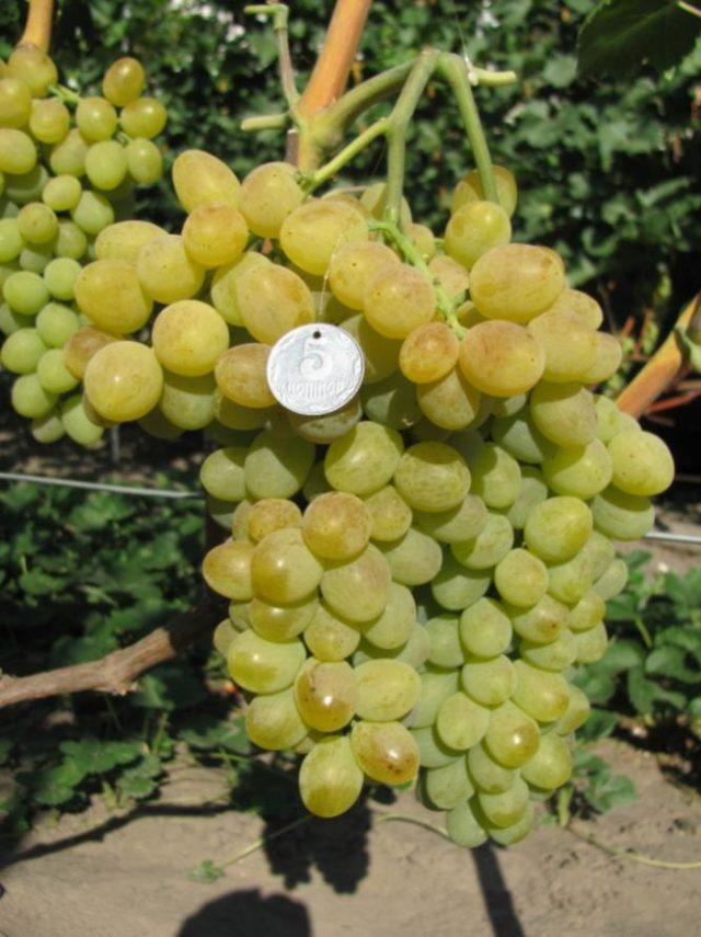 гроздь винограда с монеткой