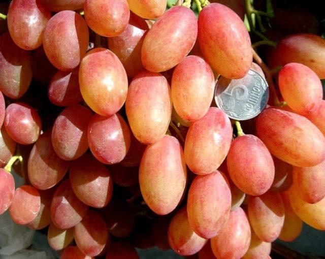 виноград с монеткой