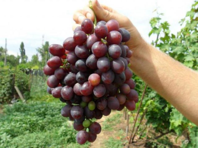 гроздь в руке
