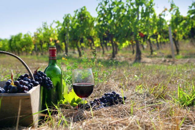 виноград, бутылка с вином
