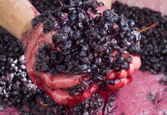 виноград давленный в руках