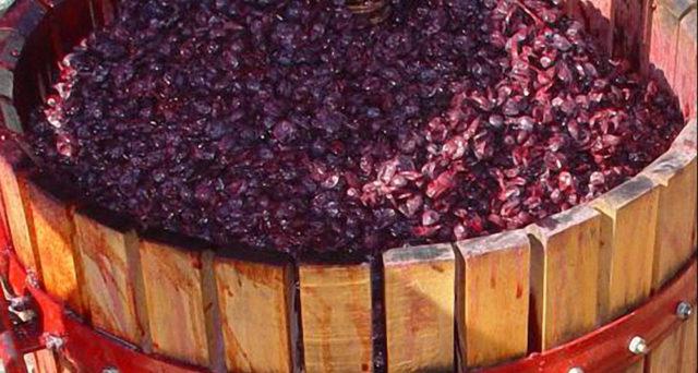 брожение вина, шапка на вине