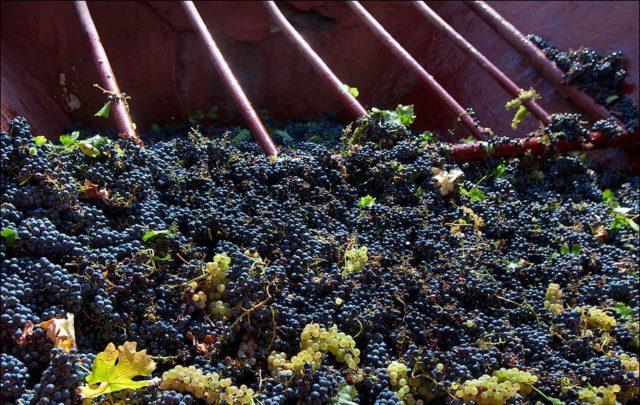 вино на производстве