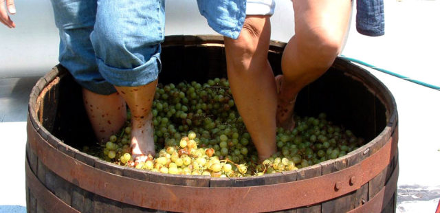 топчут виноград
