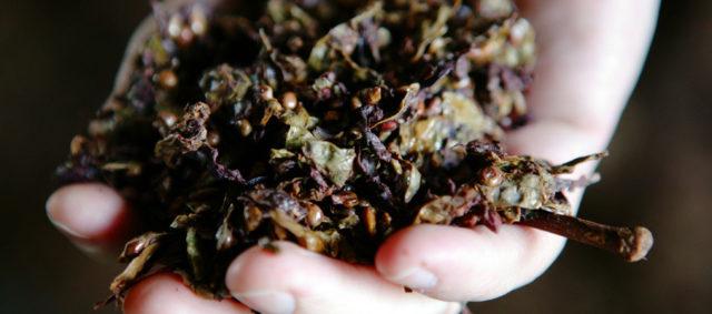 виноградный жмых в руке